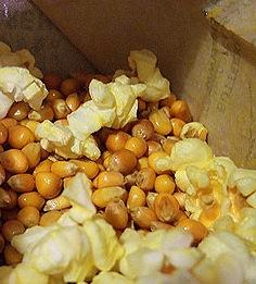 Grains de maïs non éclatés